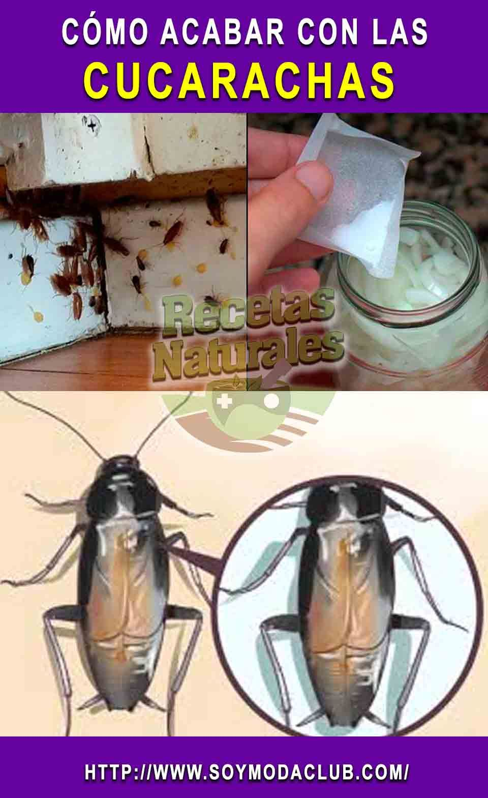 Como Acabar Con Las Moscas De Casa Pin En Cucarachas