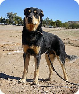 Casa Grande Az Husky Rottweiler Mix Meet Dakar A Dog For