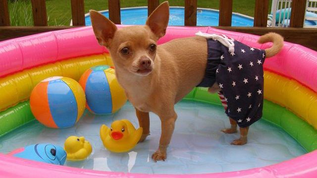15 Dogs That Rock Bathing Suits Better Than You Puppy Pool