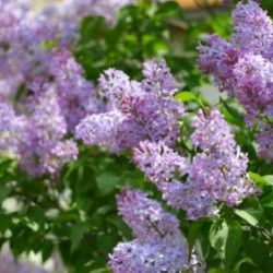 DIY Therapeutic Garden - Articles