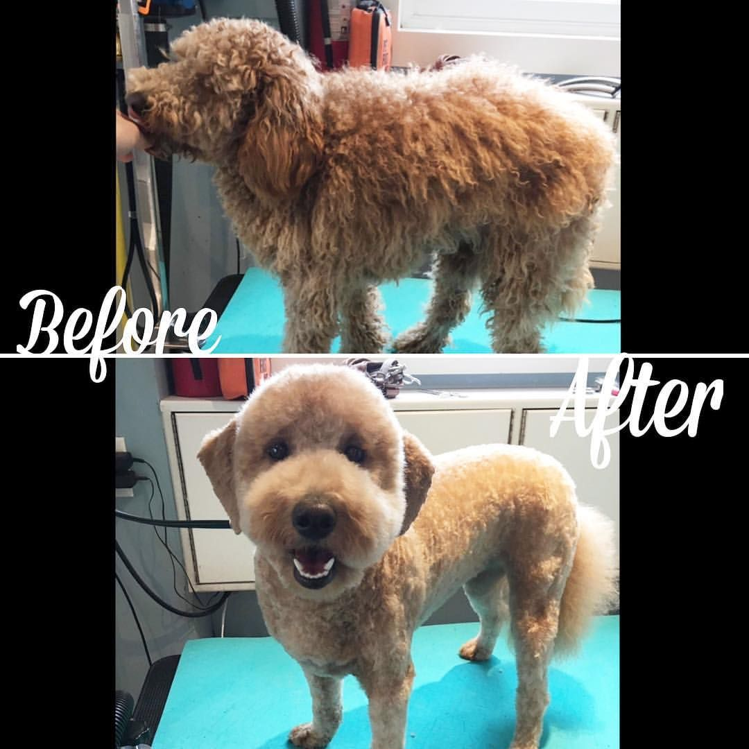 Pet Grooming In Victoria Bc On Instagram Eva Beforeandafter Transformation Pet Grooming Pets