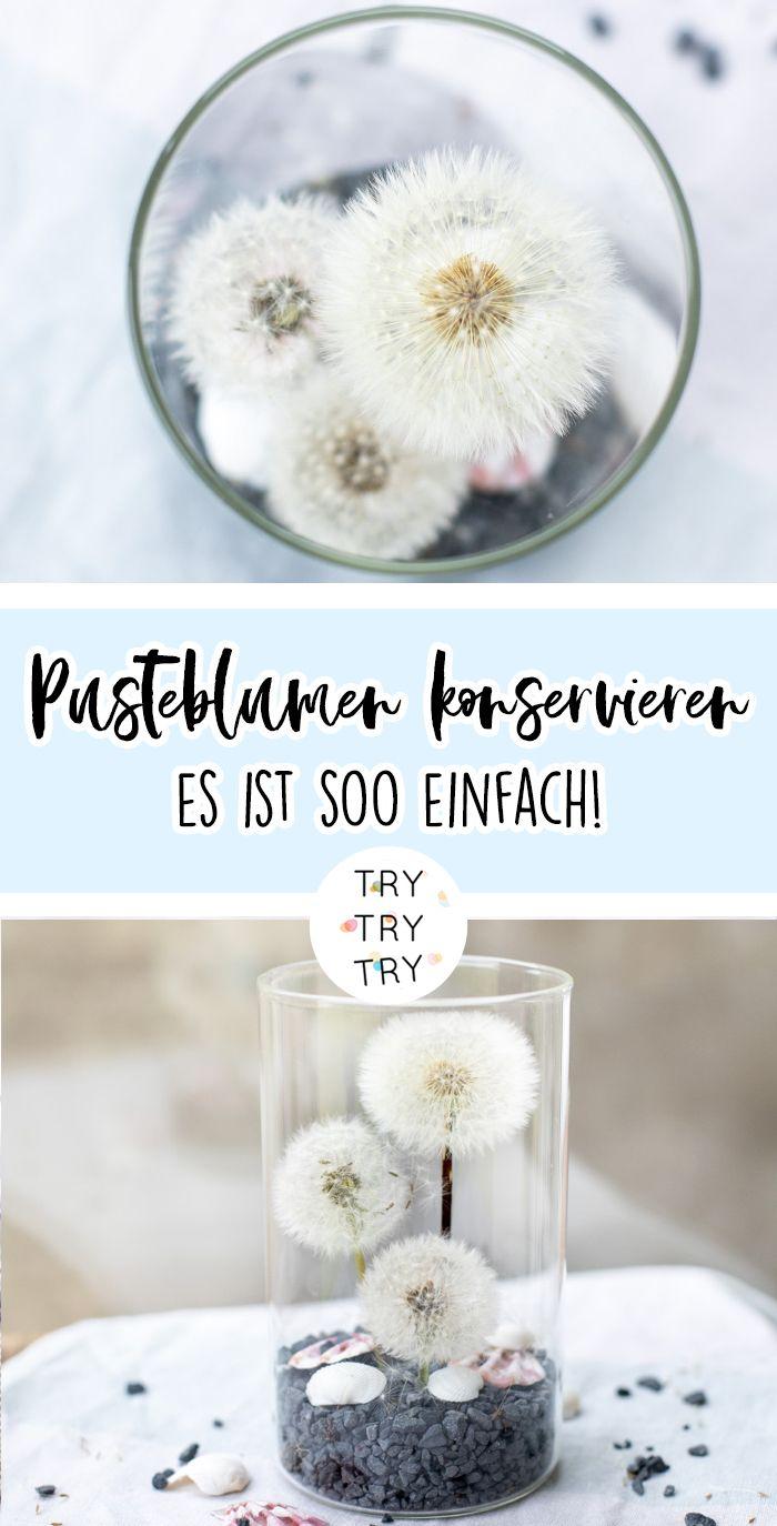 Pusteblumen konservieren (ohne Haarspray und co.) und als Deko verwenden