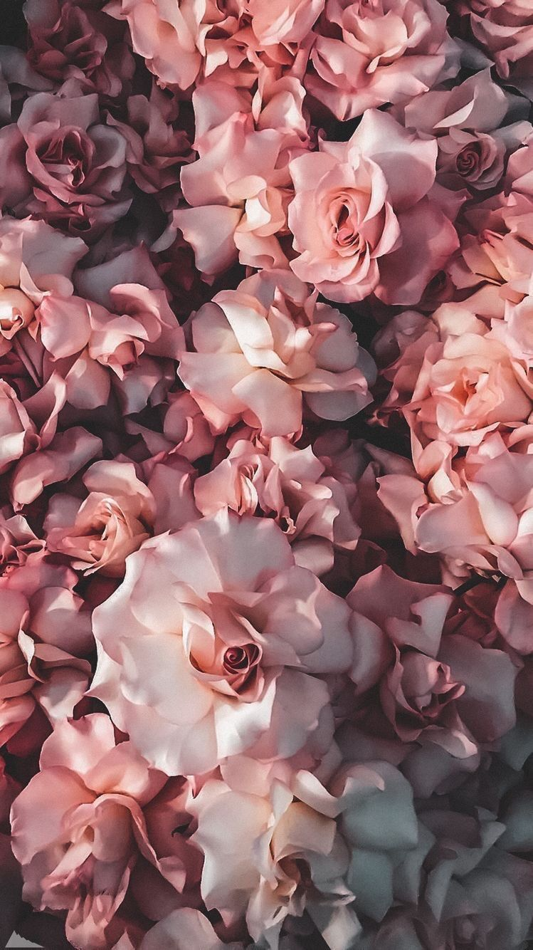 Postcard From The Kefir Application Kefirapp Com Background Picture Flowers P In 2020 Flower Phone Wallpaper Rose Gold Wallpaper Iphone White Roses Wallpaper