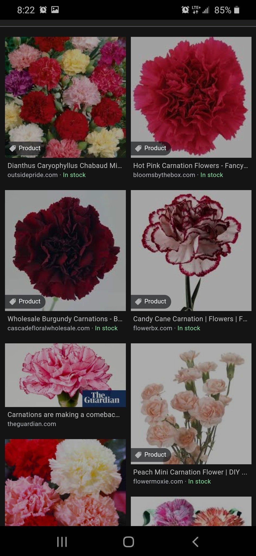 Carnation In 2020 Carnation Flower Pink Carnations Carnations