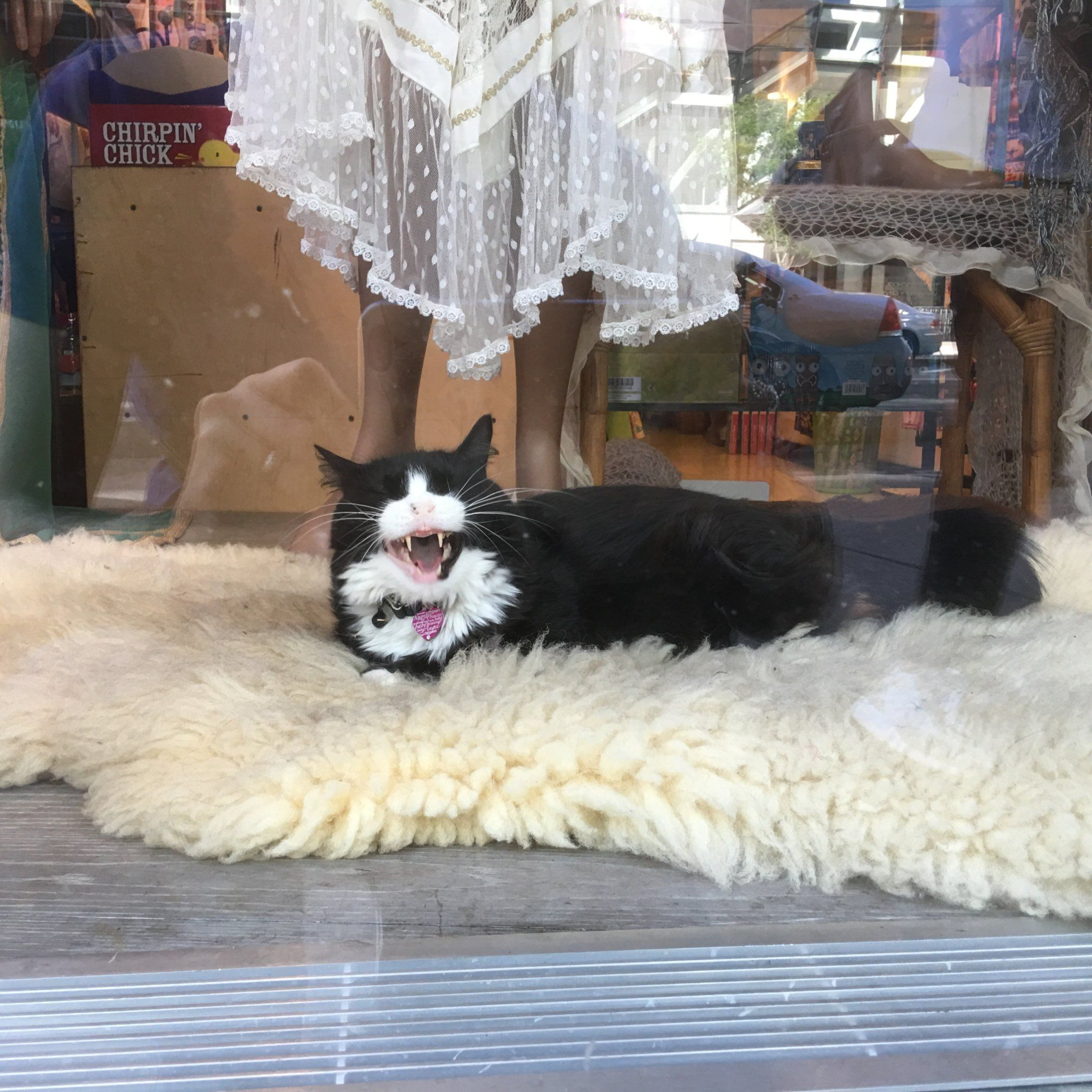 The Felines of New York: The Shop Window Cat   Hi everyone, We are back today with another little post on our felines of New York. It comes as no surprise that there is a whole book on the felines of the city available as it certainly seemed that we bumped into another cat at every street corner! This particular beautiful cat was resting on […]   #Cat, #Cats, #Cute, #Funny, #Katze, #Katzen, #Katzenworld, #Kawaii, #Pets, #ねこ, #猫 #CatTravel, #USA
