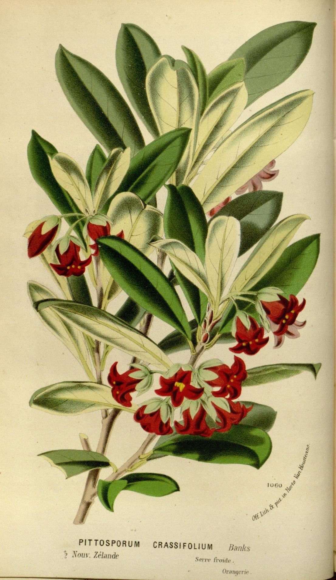 v.21 (1875) - Flore des serres et des jardins de l'Europe - Biodiversity Heritage Library