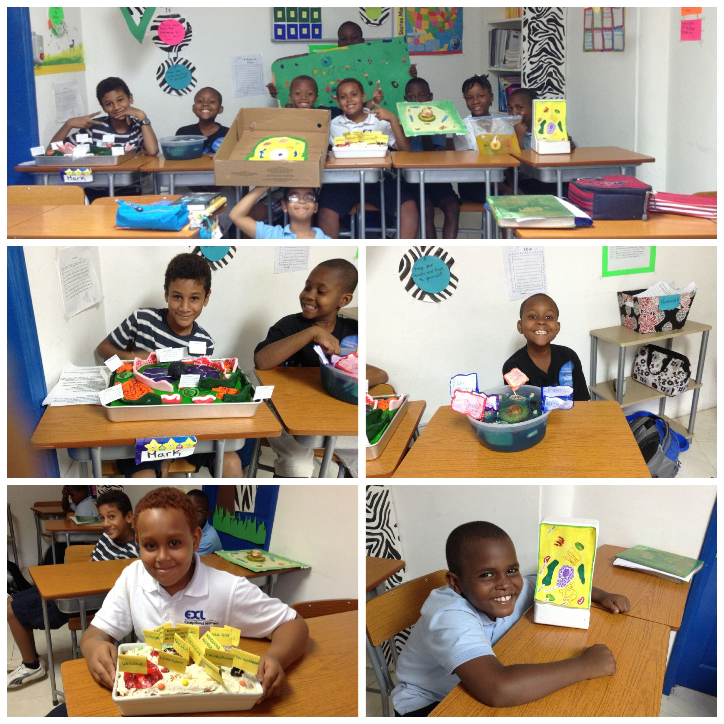 4th Grade Plant Animal Cell Project