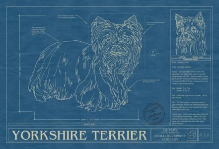 Animal blueprint company yorkshire terrier dog art print dog animal blueprint company yorkshire terrier dog art print malvernweather Gallery