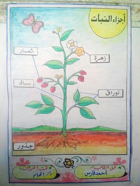Pin By F Al On المدرسة Teaching The Alphabet Science For Kids Math Tricks