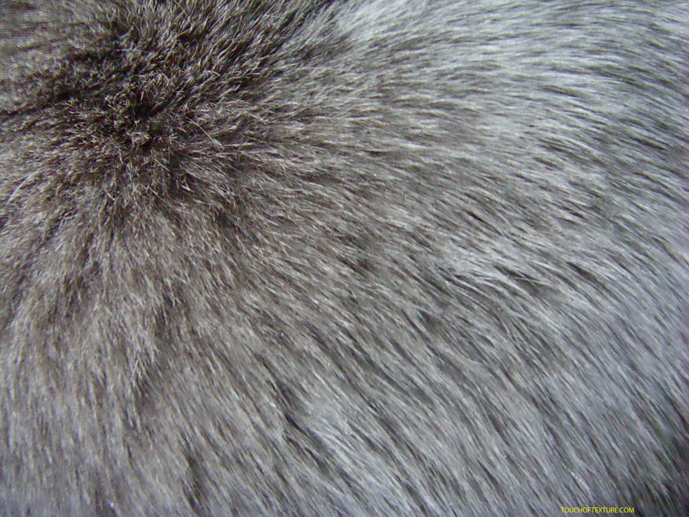fur_texture1719.jpg (2304×1728) | Material Reference ...