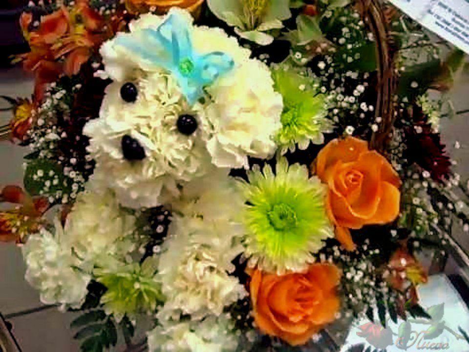 Carnation dog   mis arreglos   Pinterest   Carnation, Flower ...