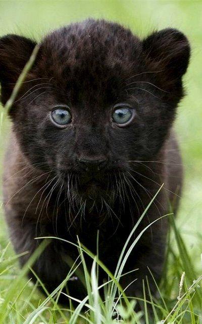 7517fa85ffc9 Rare Black Lion Pub baby
