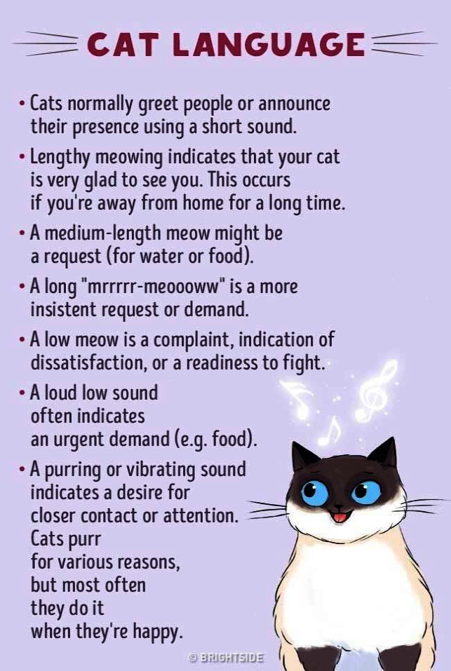Cats Have Their Own Language And If You Manage To Learn It You Will Be Rewarded Cat Language Newborn Kittens Crazy Cats