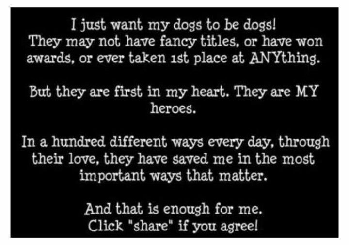 ♥ my dogs!