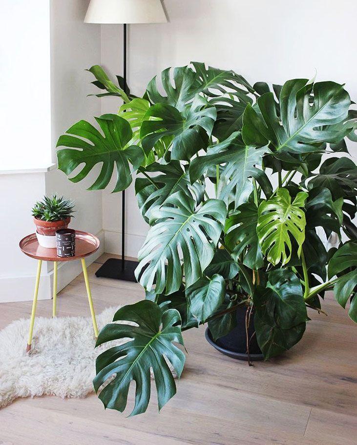 Expert 7 l ttsk tta tr d att ha inomhus plants for Raumgestaltung mit zimmerpflanzen