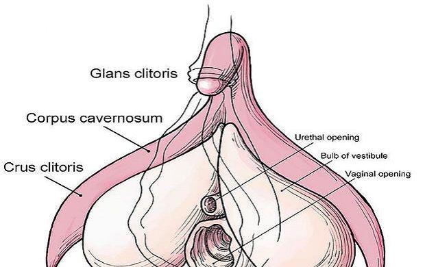 transmen-and-clitoris-growth