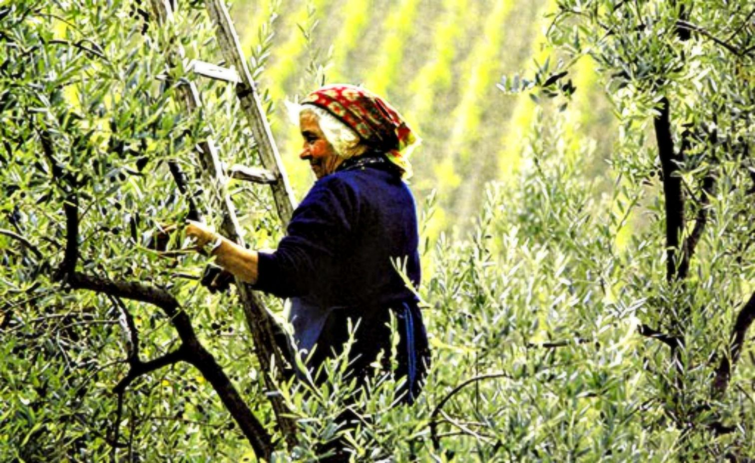 (pinned by pinner ... enlarged by me) ...Harvest somewhere in Italy