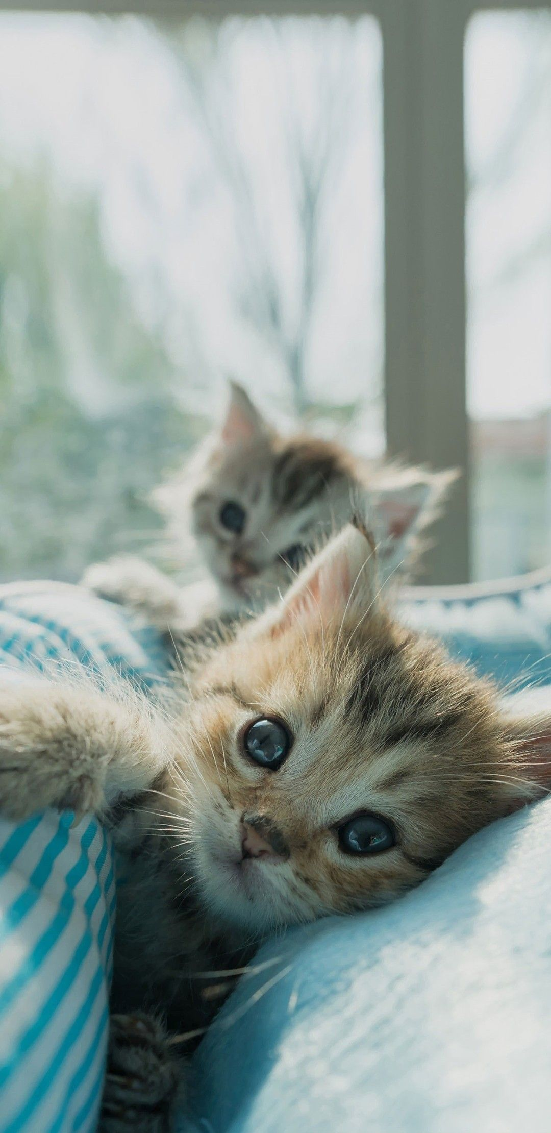 Wallpaper Cat In 2020 Kittens Cutest Cute Animals Cute Cats And Kittens