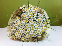 çiçek tacı ile ilgili görsel sonucu