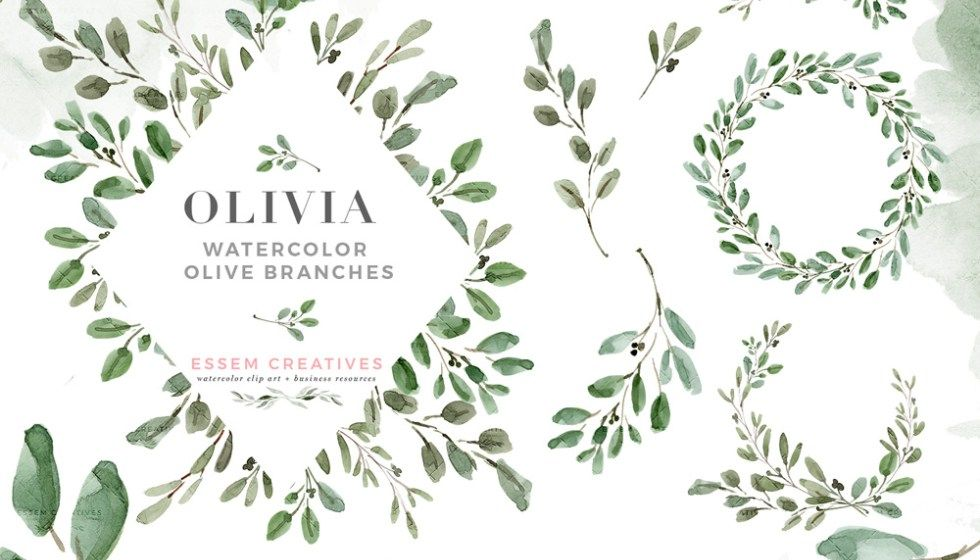 Watercolor Olive Branch Clipart Olive Leaves Wreath Leaf Clipart