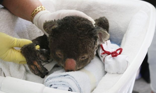 Thanks Everyone But The Koalas Have Enough Mittens Now Baby