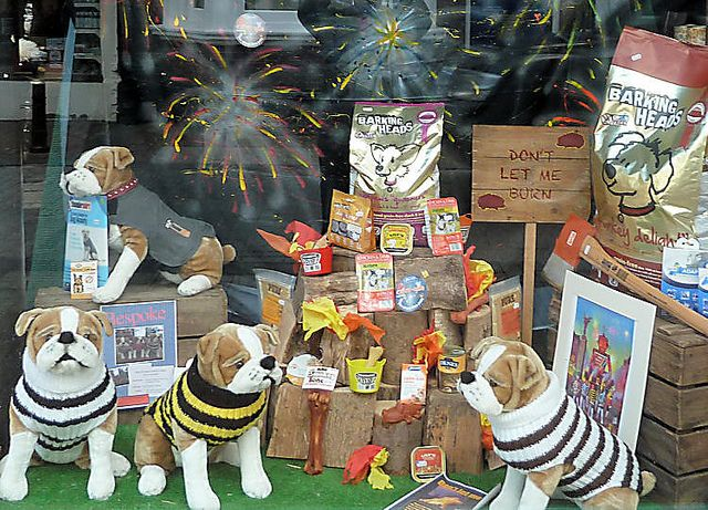 Lewes Bonfire Window Display Pet Shop Pet Store Design Pet Store Dog Pet Shop