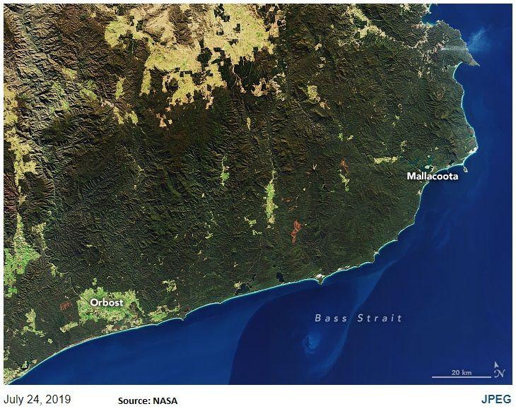 InDepth Australian bushfires kill millions of animals