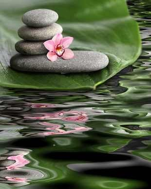 peaceful  looking lily pad