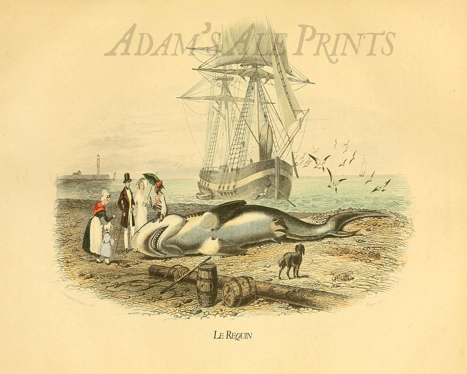 The Shark: A Victorian Era Print In Neutral Colors (Except The Red ...