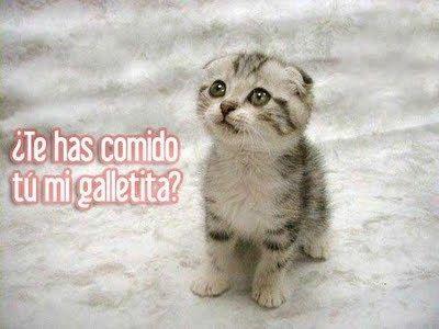 Imagenes De Gatitos Tiernos Con Frases De Amor Tiernos Kittens