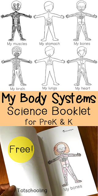 My Body Systems Science Booklet