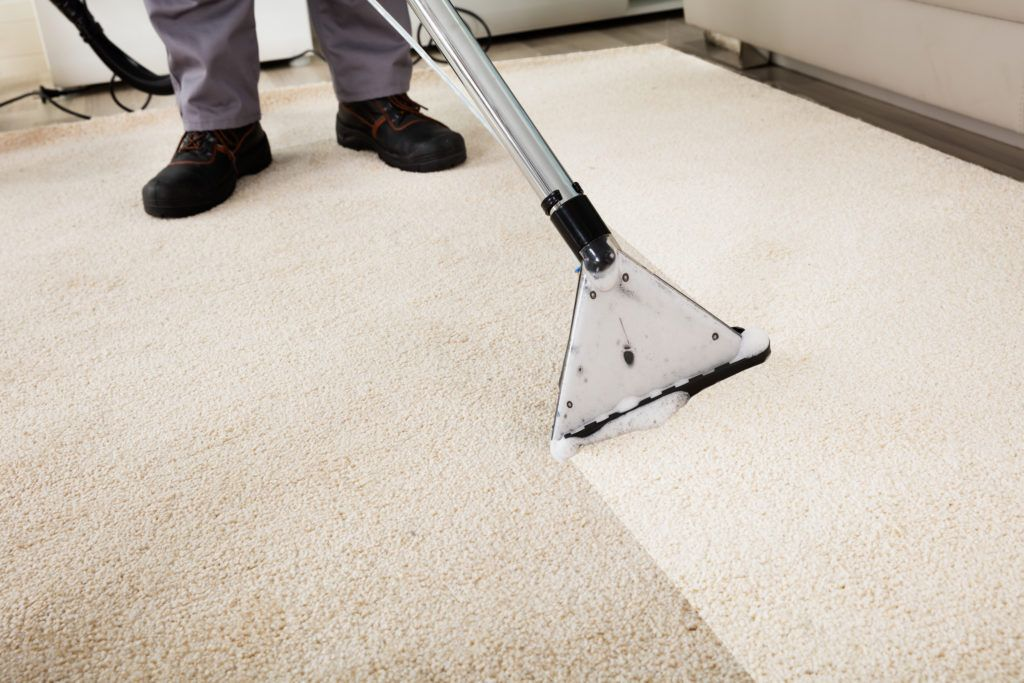 Professional Carpet Cleaners In Auburn In And Angola In How To Clean Carpet Steam Clean Carpet Cleaning Upholstery