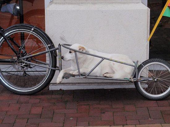 11 Ways To Take Dogs On Bikes Biking With Dog Bike Trailer Bicycle