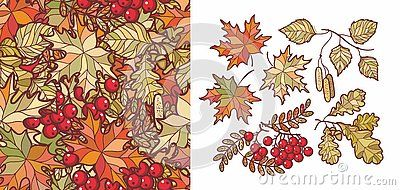 Autumn leaves set with Rowan, maple, birch and oak. Fall leaf design. Foliage forest leaf vector. Red, Green, brown and yellow falling autumn leaves. Autumn leaves seamless pattern. Ash leaf and berry #autumnleavesfalling