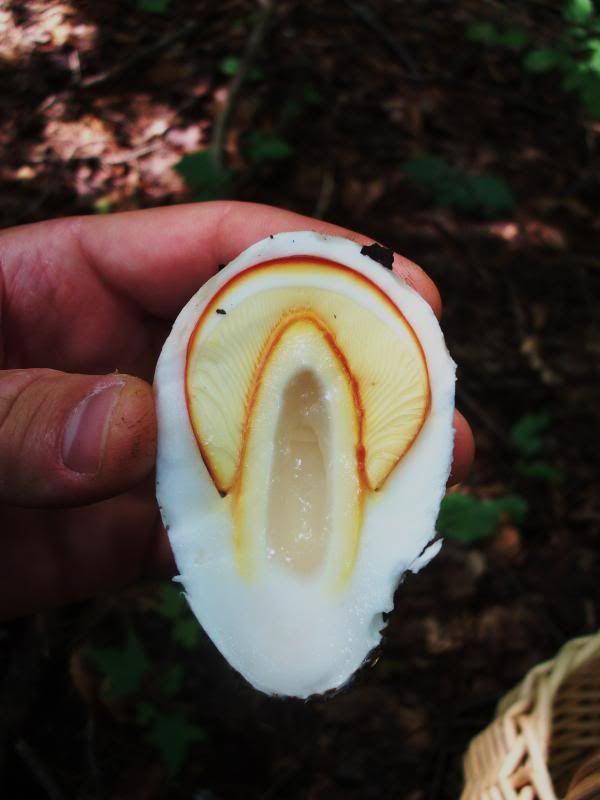 Shroom finds '13 (1of2) - Mushroom Hunting and Identification