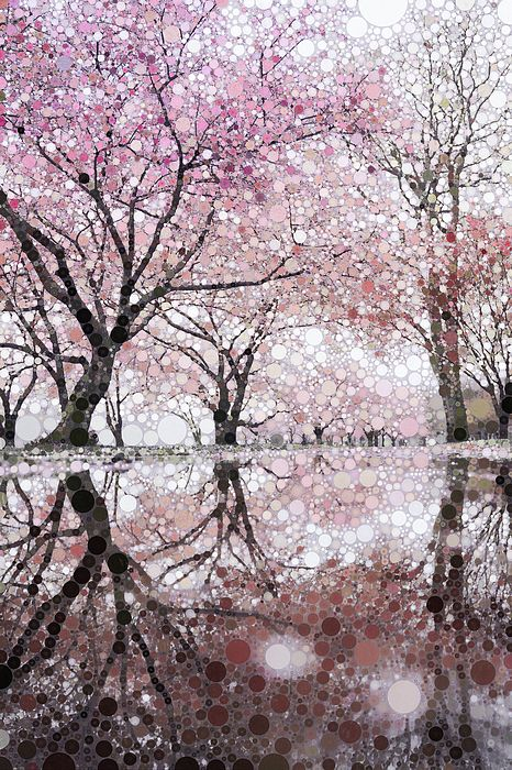 Pin By John M Bailey On Shadows Silhouettes Reflections Colorful Landscape Botanical Wall Art Blossom Trees