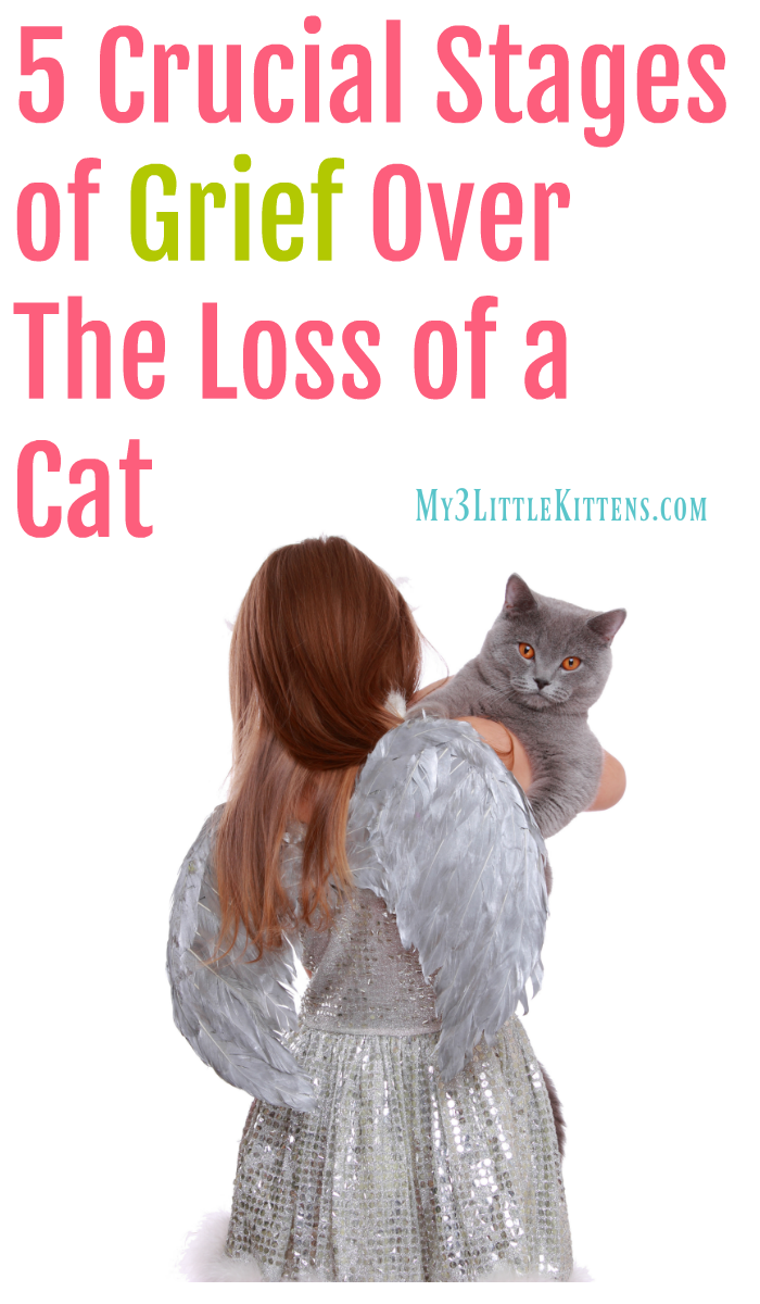 5 Crucial Stages Of Grief Over The Loss Of A Cat My 3 Little