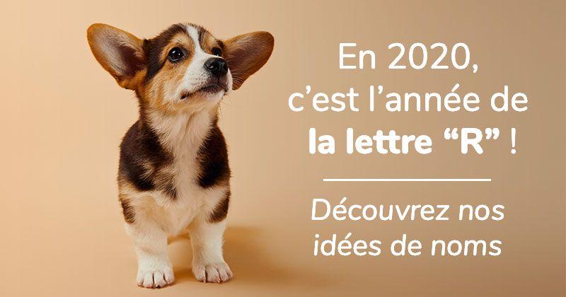Vous avez décidé de sauter le pas et acheter ou adopter un chienpour bien commencer cette nouvelle décennie ? Voici toutes nos propositions de noms de chien en R pour l'année 2020!