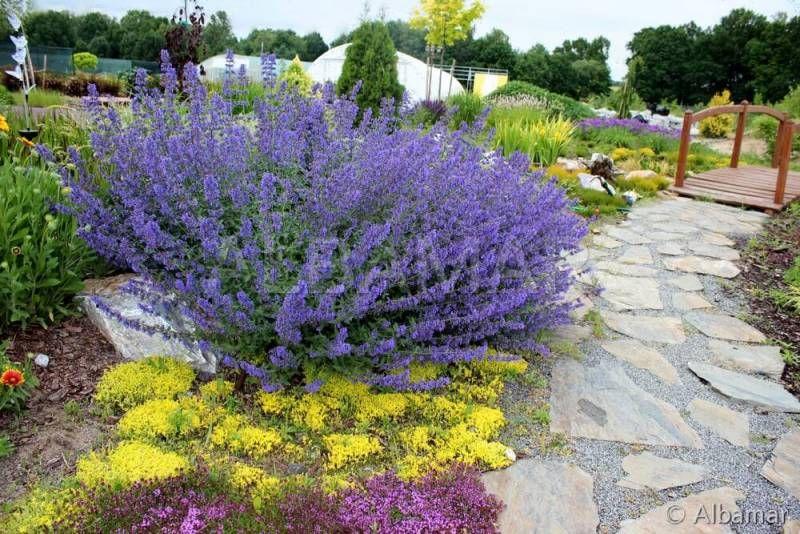 Kwiaty Dlugo Kwitnace Rosliny Ogrody Kwiaty