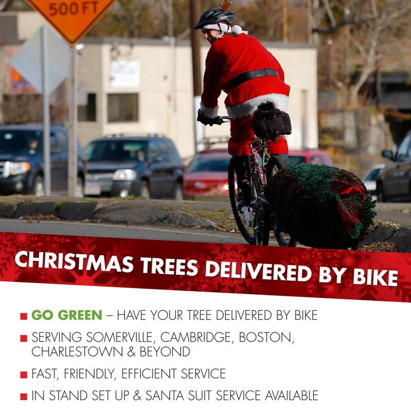 Christmas Tree Delivery BY BIKE. D D D From Ricky's