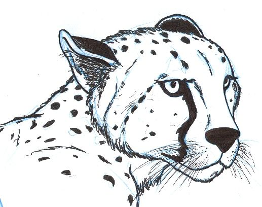 how to draw a cheetah easy