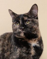 Adopt HelenCherry Tree Petsmart on Cats, kittens, Cute