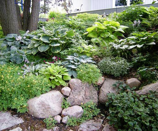 Design lessons from a minnesota shade garden flow rock for Hillside landscaping plants
