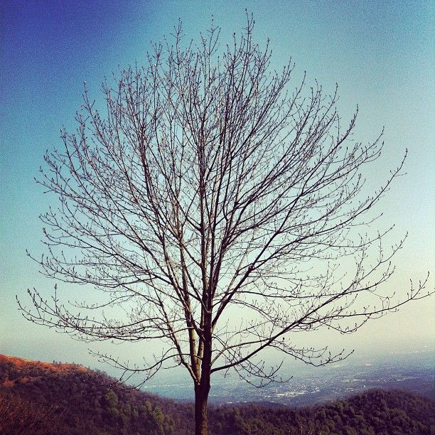 A #tree with a #view. #landscape #nature #sky...