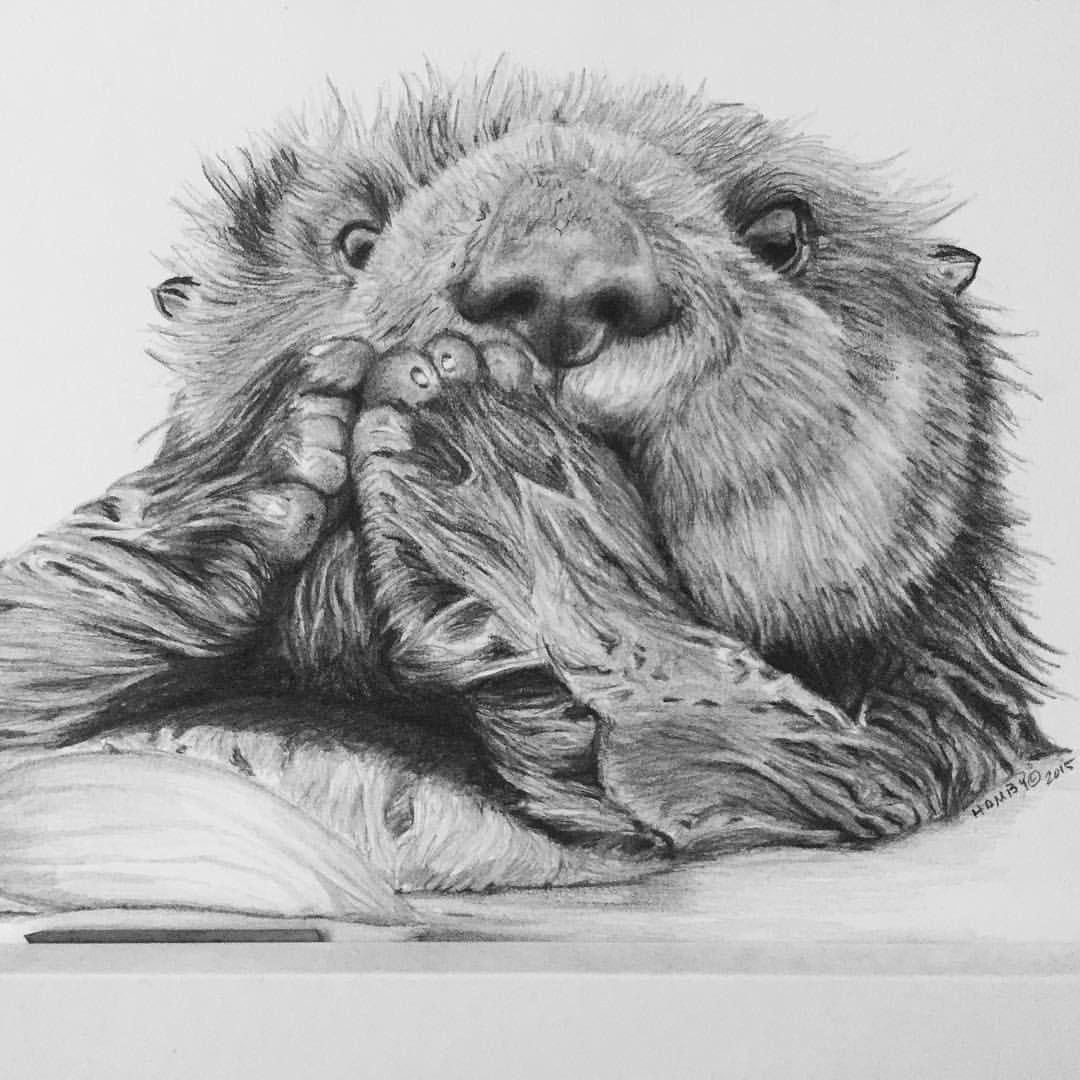 "Sea Otter ""Gentle"" @ gregghambyart Original Pencil Drawing ...  Sea Otter ""..."