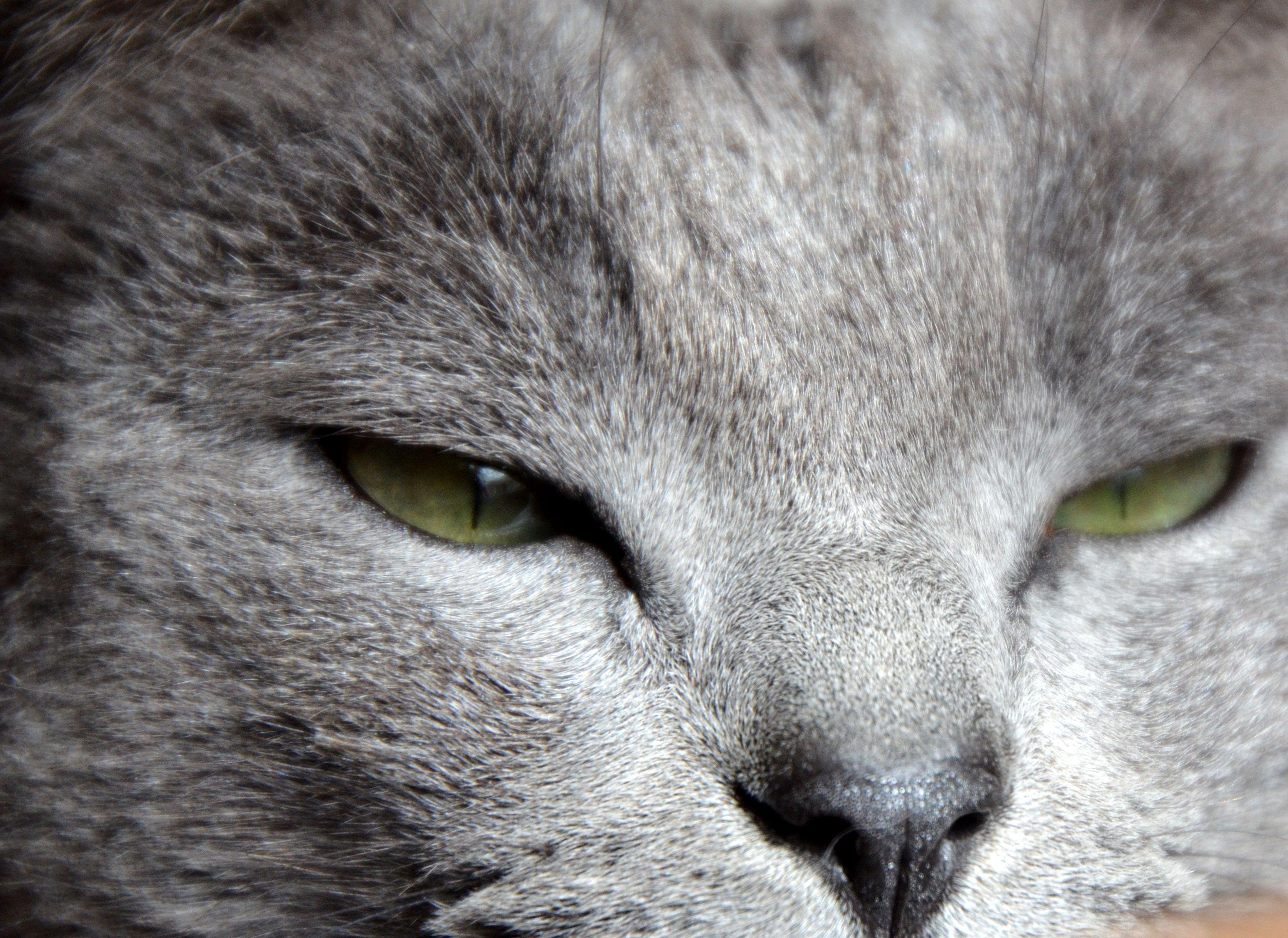 cat eyes by ©estrela