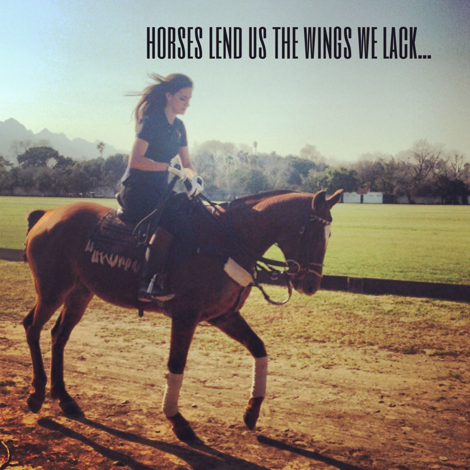 Pics photos quote i wrote for my horse com account s equestrian -  Horses Lend Us The Wings We Lack Horses Are Also Our Dance Partners
