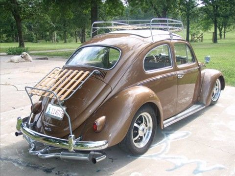 Pin En Beetle Mania