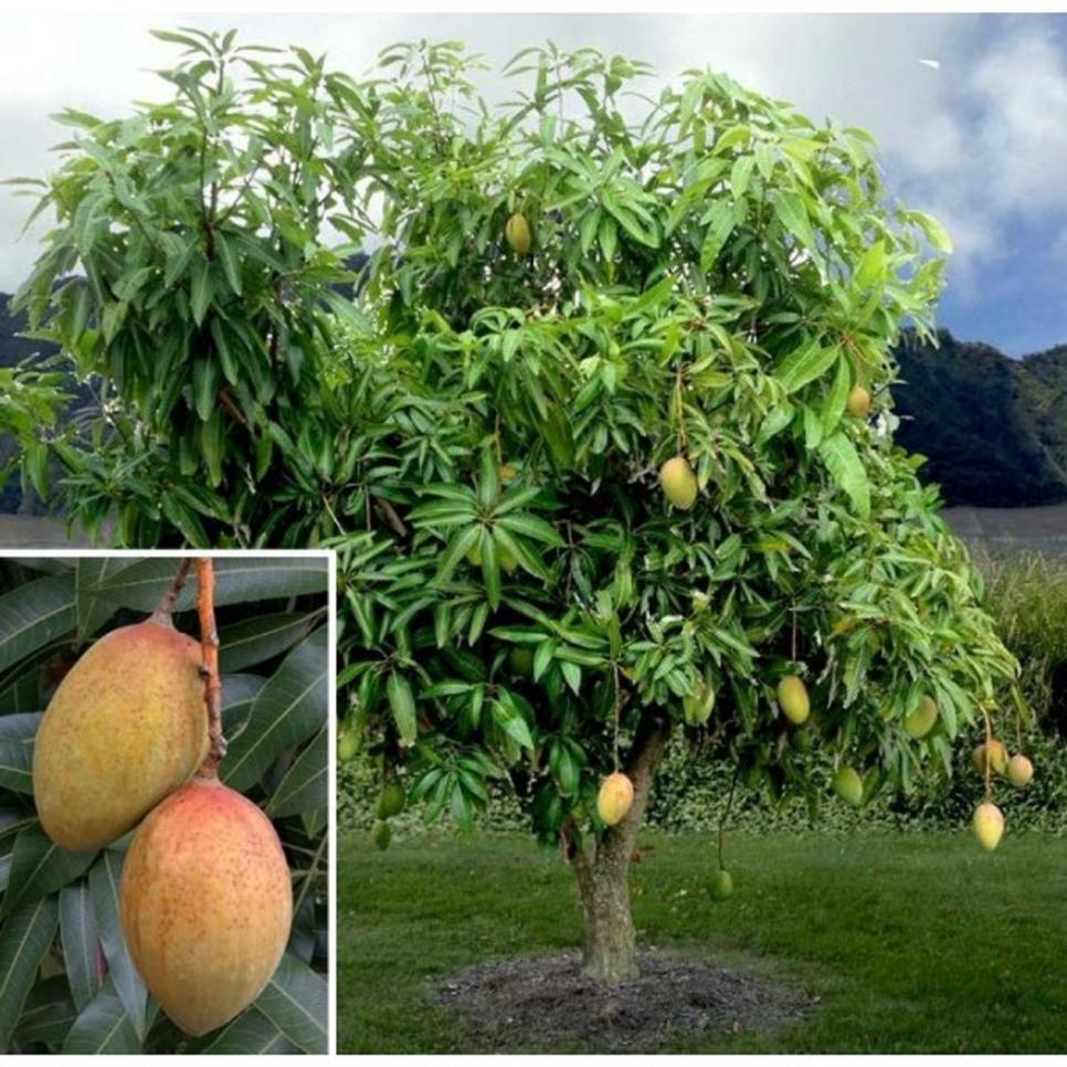 13 Easy Herbs To Grow Indoors Growing Herbs Indoors 640 x 480