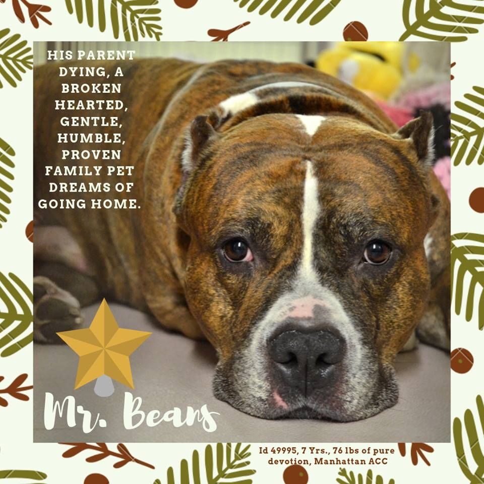 Image May Contain Text Help Save The Dogs Please 2nd Pg Dogs Animals Mr Bean